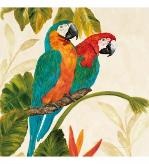 Buy  Wall Decor Canvas 24 x 24 Inch Macaw Pair Framed Digital Art Print Online