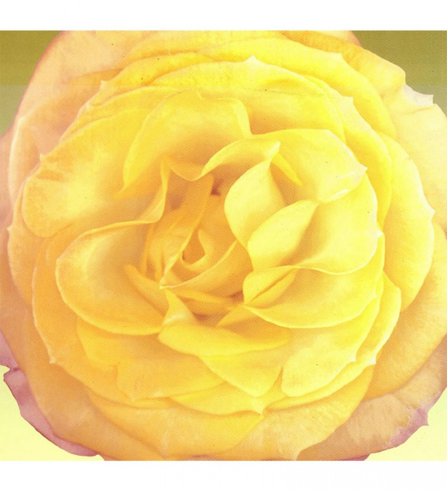 Exclusive Wall Decor Canvas 24 x 24 Inch Yellow Single Flower Framed ...