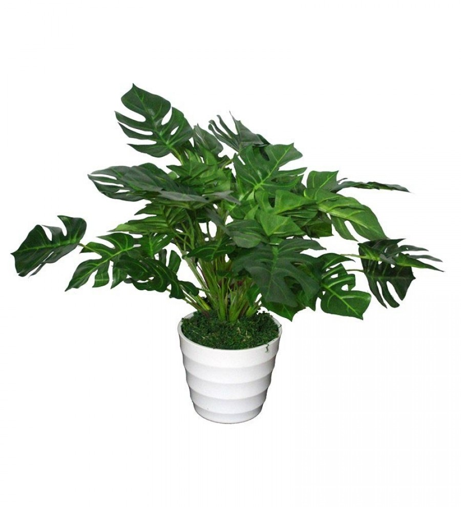 Buy  Pollination Green Polyester Monstera Artificial Plant with Pot Online